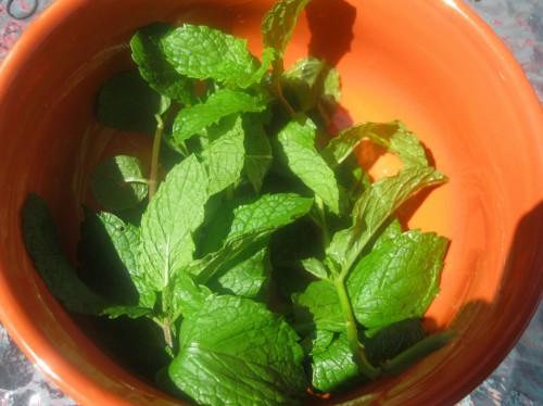 Summer Mint Macaroni Salad